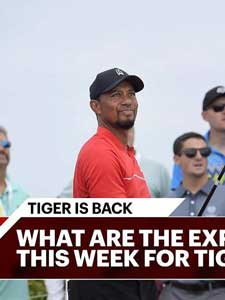 Tiger in full: